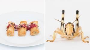 Eine Collage: Frühlingsrollen und ein Insekt.
