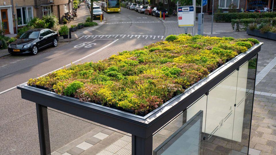 Eine bepflanzte Haltestelle in Utrecht