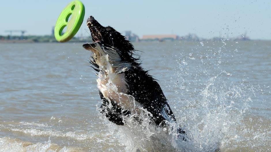 Tipps und Tricks: Was Hunden, Katzen und Kaninchen gegen Hitze hilft