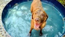 Auch Hunde kämpfen bei hohen Temperaturen gegen die Hitze
