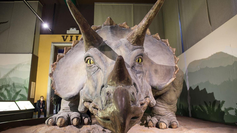 Eine Nachbildung eines Triceratops
