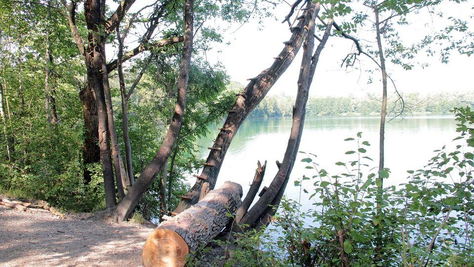 Am Ufer des Hochstraßer Sees bei Rosenheim: Beim Sprung von einem der Bäume mit Hilfe eines an einem Ast befestigten Seil hat sich ein 13-jähriger Junge den Unterarm abgerissen.