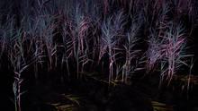 Im trüben Wasser des Tollensesees sehen am 1. Januar 2012 zwei Angler etwas, das ausschaut wie ein Oberkörper