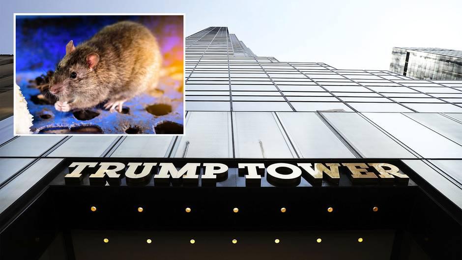 Medien berichten, dass Trumps eigene Immobilien von Ratten befallen sind