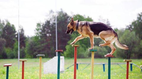 Hunde lassen sich zu allerlei Tricks erziehen (Symbolbild)