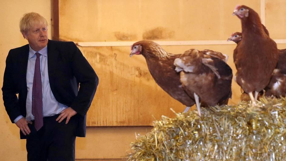 Boris Johnson, Premierminister von Großbritannien,während seines Besuchs der Shervington Farm in Newport (Wales)