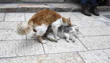 Sie vermisse ihre eigenen Katzen, die vor zwei Jahren gestorben waren, sagte die Seniorin