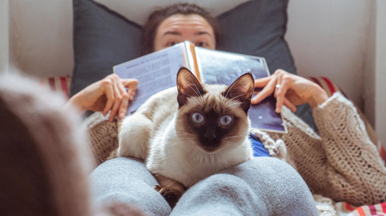 Frau mit Katze auf den Knien