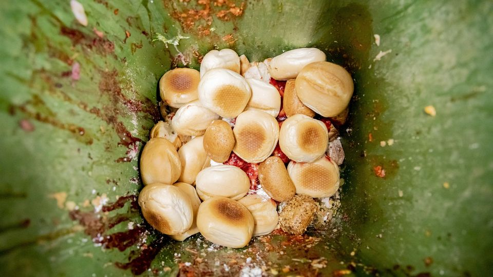 Lebensmittelverschwendung: Brötchen und andere Lebensmittelabfälle liegen in einer Tonne