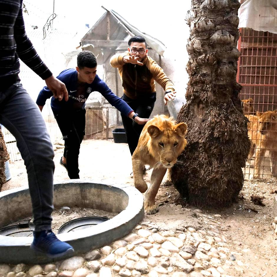 Naher Osten: Ein Zoo zieht um – Dr. Khalil rettet Tiere aus Krisengebieten