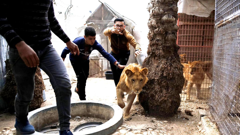 Ein Zoo zieht um: Unterwegs mit einer Tierschutzorganisation in Gaza