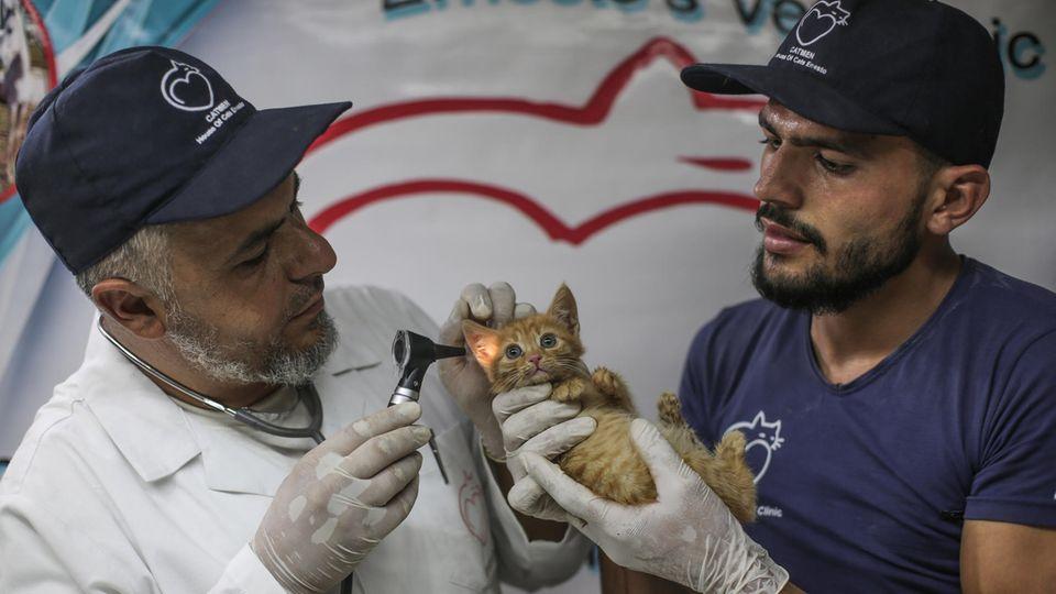 Der Tierarzt Mohammad Youssef (l) untersucht eine Katze im Ernesto's Cat Sanctuary