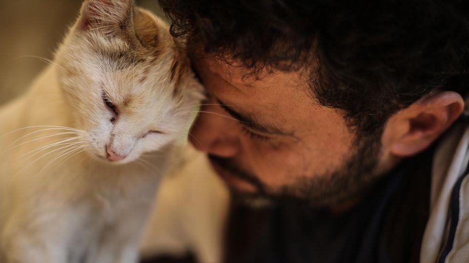 Mohammed Alaa versorgt eine Katze im Ernesto's Cat Sanctuary