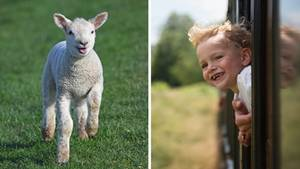 Collage: Lamm auf einer Wiese, Kind lächelt aus einem Zugfenster