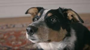 Hund in Video von Anti-Raucher-Kampagne aus Neuseeland