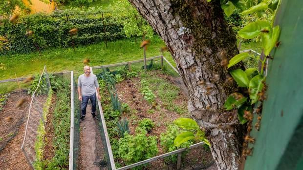 Kein Pestizid, kein Insektizid: Gartengestalter Rainer Kaufmann freut sich jeden Tag an seinem gesunden Gemüse