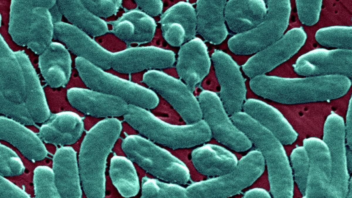 Vibrionen Infektion
