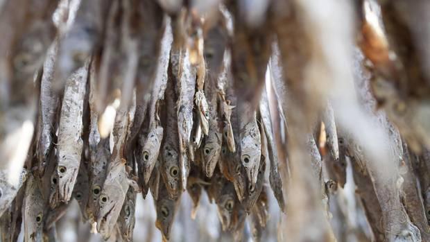 Rückruf Trockenfisch