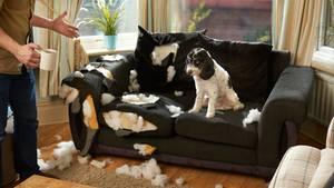 Hunde zerstören aus Langeweile Möbel