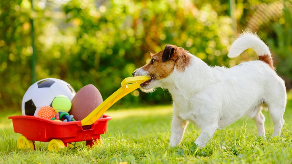 Hunde brauchen ihr eigenes Spielzeug