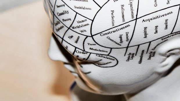 Modell eines Kopfes mit eingezeichneten Hirnarealen