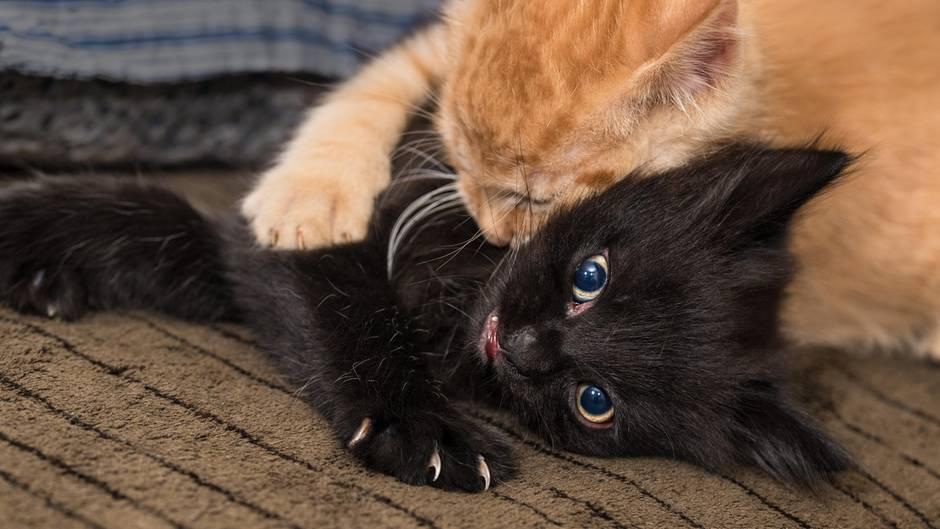 Katzenallergie Impfung