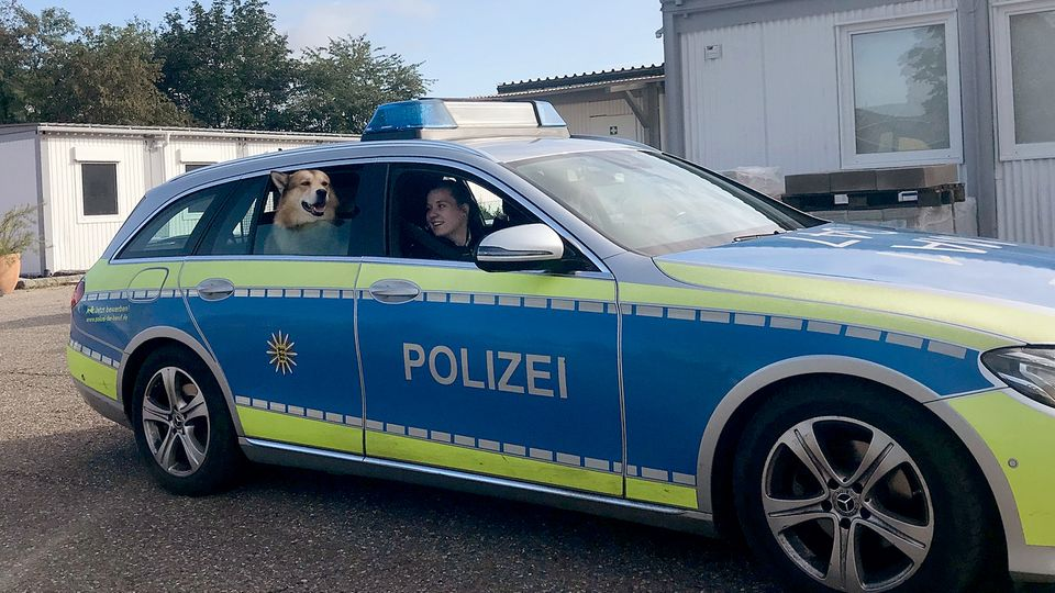 Der entlaufene Hund auf dem Rücksitz des Polizeiautos