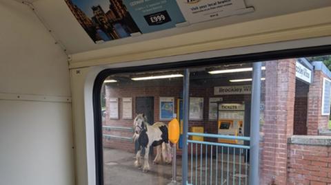 Will Mapplebeck traute seinen Augen kaum: Ein Pferd am Bahnhof