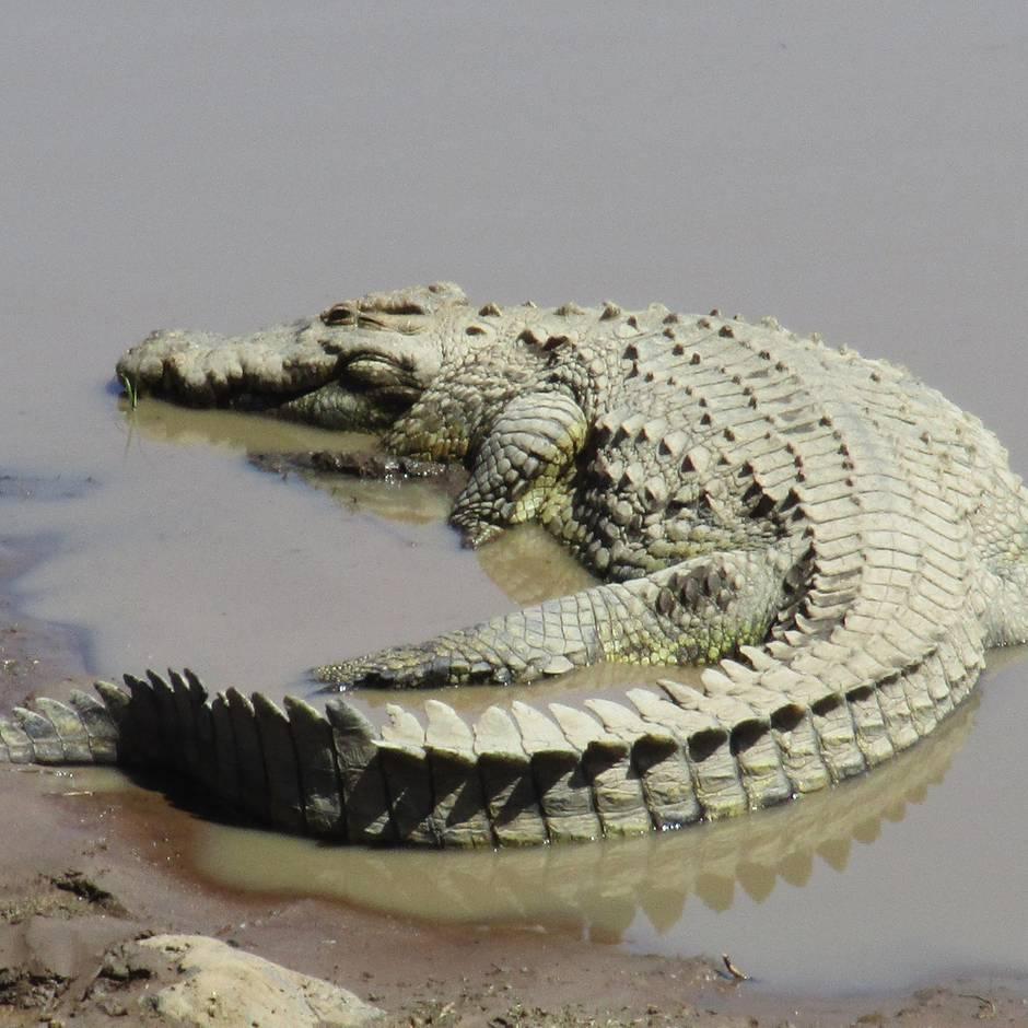 News von heute: Krokodil verstümmelt und tötet Zehnjährigen auf den Philippinen
