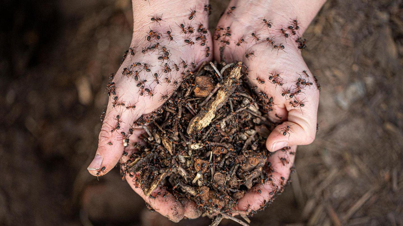 Unterwegs mit Ameisenumsiedlerin im brandenburgischen Schönefeld