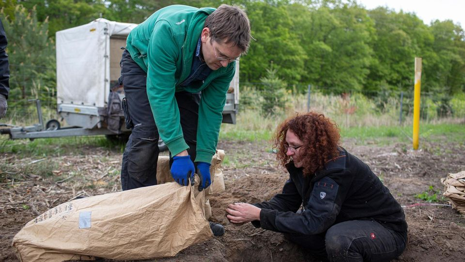 Die Umsiedler Christina Grätz und Markus Zaplata verfrachten Tiere und Streu in Säcke