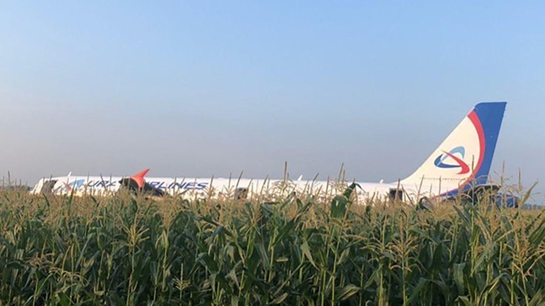Die notgelandete Maschineder Ural Airlines in einem Maisfeld unweit von Moskau