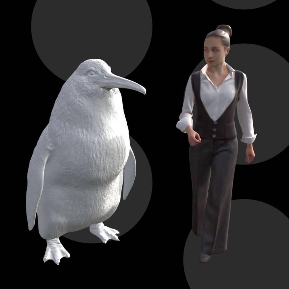 Neuseeland: Forscher haben Überreste eines menschengroßen Riesenpinguins entdeckt