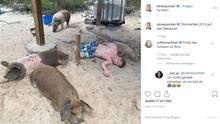 Vip News: Oliver Pocher macht Urlaub auf den Bahamas