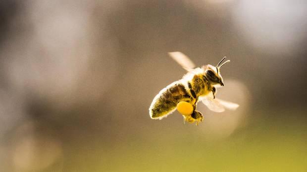 An einem sonnigen Tag fliegen drei Bienen übereinander