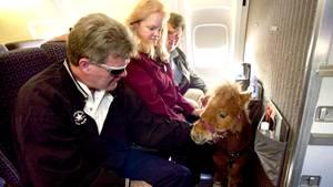 Ein Minipferd steht im Flugzeug vor drei sitzenden Passagieren