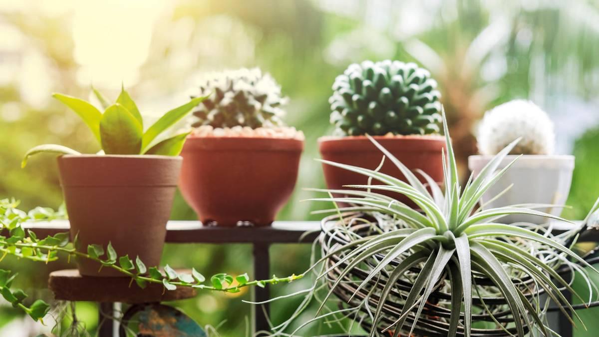 Grüner Daumen: Tipps für Monstera und Co.: So wirst du zum Zimmerpflanzen-Guru