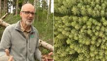 Collage: Der Förster Peter Wohlleben im Wald und eine Drohnenaufnahme des Waldes
