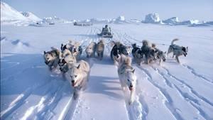 Huskys ziehen Schlitten durch die verschneite Landschaft. In manchen Regionen der Insel leben fast so viele Hunde wie Menschen