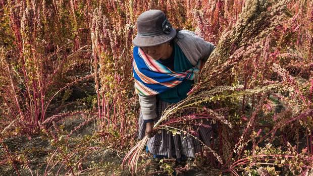 Auch Quinoa-Anbau wird betrieben
