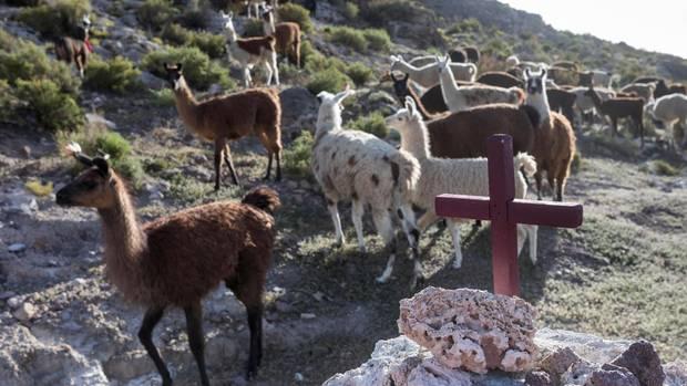 Uyuni ist mit rund 20000 Einwohnern die größte Stadt der Region. Die Landbevölkerung lebt unter anderem von der Alpakazucht.