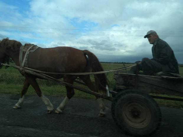 Als wir überholen, schnell aus dem Autofenster fotografiert: Ein Pferdekarren