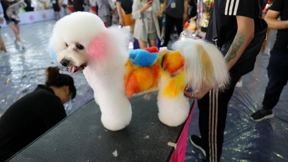 """Shanghai, China: Hundeschönheitswettbewerbauf der 22. Asian Pet Show in Shanghai. Professionelle Kosmetikerinnen richteten niedliche Hunde-Models her. Besonders auffällig war dieses """"Make Up""""."""
