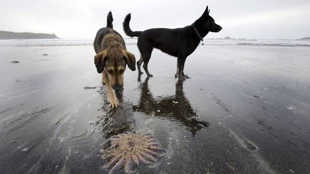 Dem Menschen folgt der Hund - für die Umwelt bedeuten beide nichts Gutes (Symbolbild)