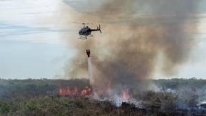 In Brasilienwüten die schwersten Waldbrände seit Jahren