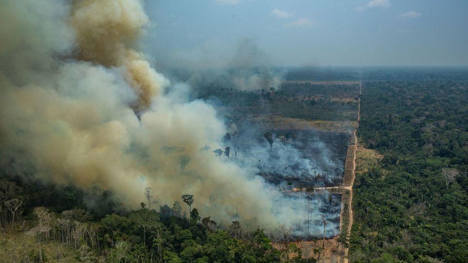 Amazonas-Feuer