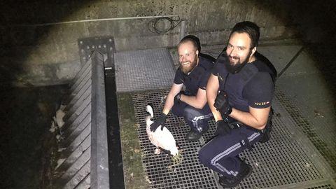 Zwei Polizisten hocken neben einem Flamingo