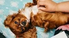 Diese Hundehotels in den USA sind äußerst luxuriös ausgestattet
