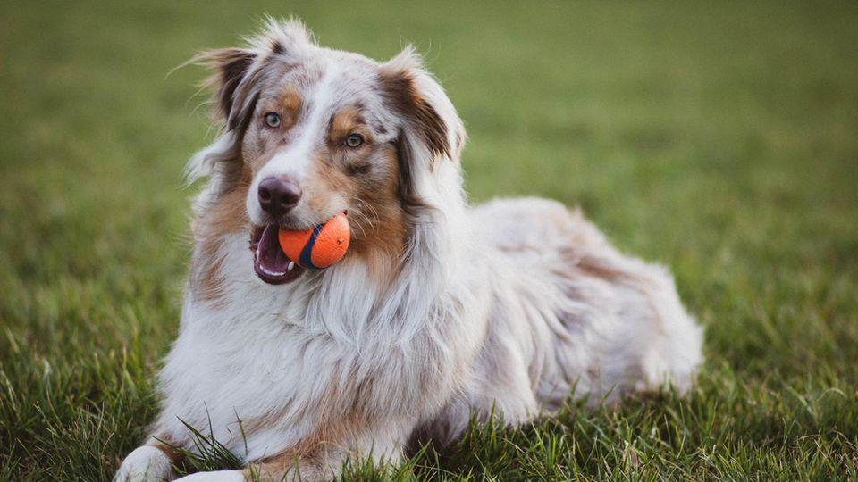 Termine für Hundebesitzer im September und Oktober