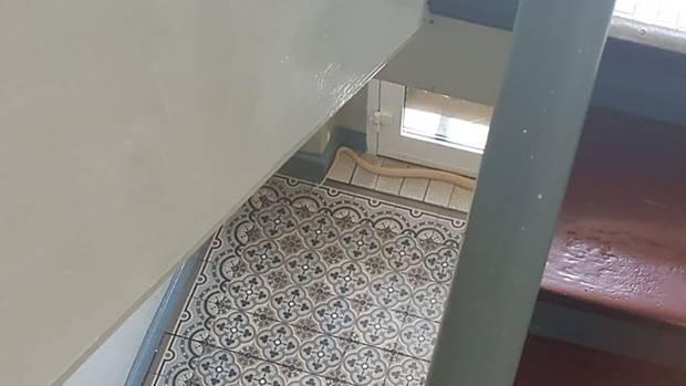 Das Handyfoto des Hausbewohners Collin Bleck zeigt die entwichene Monokelkobraim Treppenhaus